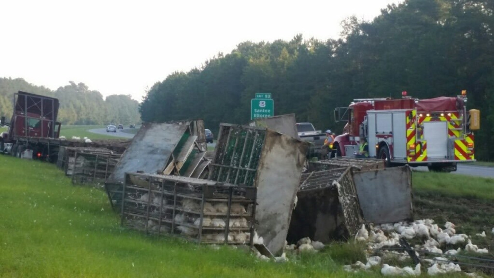 truck carrying chickens overturns on i